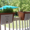 Preschool grew an herb garden outside their classroom